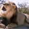 Tahaab Rais' Cannes Diary: Day 3 – The MENA Lions, Roaring Again